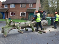 High Elms Tree Surgery Ltd - Call us today on 01582 840144