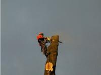High Elms pic 2