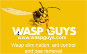 Wasp Guys